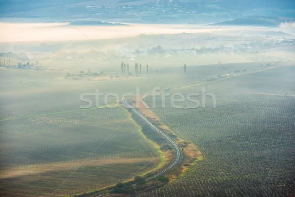 Misty road Stock photo © vapi