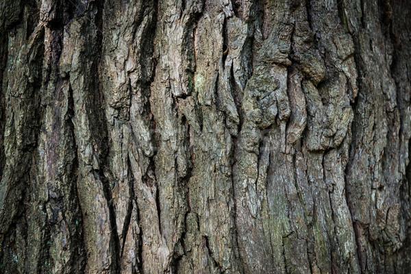 Barna tölgy ugatás konzerv fa természet Stock fotó © vapi