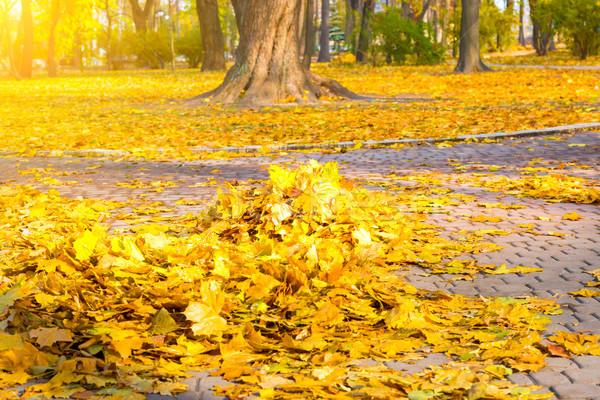 Heap of autumn yellow leaves Stock photo © vapi
