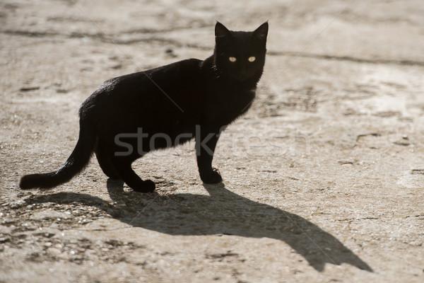 Sarı gözler büyük gölge kedi Stok fotoğraf © vapi