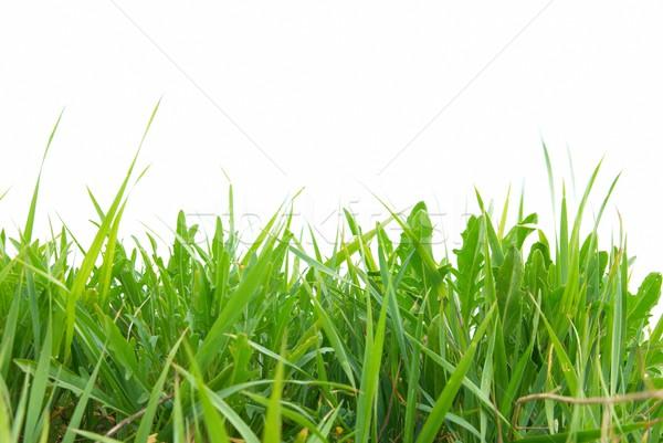 Green grass isolated Stock photo © vapi