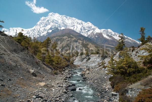 Rio tibete água grama floresta Foto stock © vapi