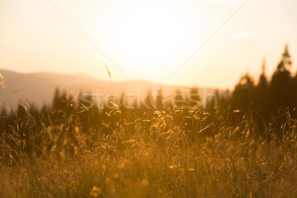 Dry grass on a field at sunset Stock photo © vapi