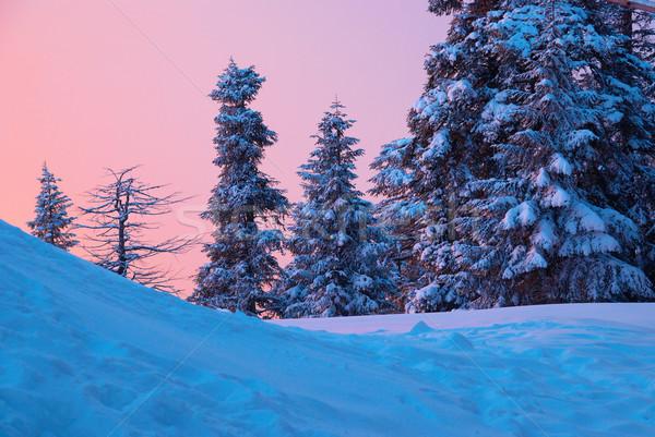 Pôr do sol inverno floresta árvores coberto Foto stock © vapi
