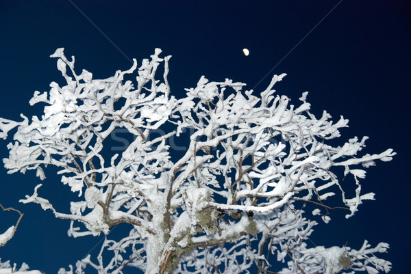 Winter icy forest in the night. Stock photo © vapi