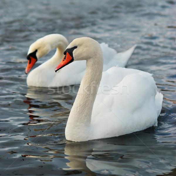 Fehér család szeretet természet kék toll Stock fotó © vapi