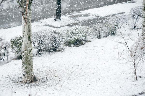 Sneeuwval winter park zwarte bomen sneeuw Stockfoto © vapi