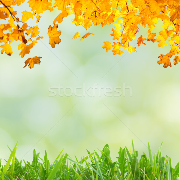 Golden, yellow and orange leaves Stock photo © vapi