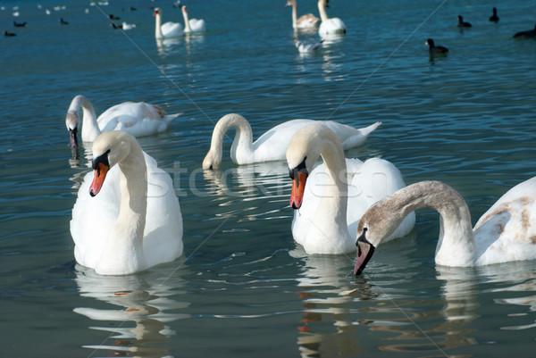 Tó kék víz család szeretet szépség Stock fotó © vapi