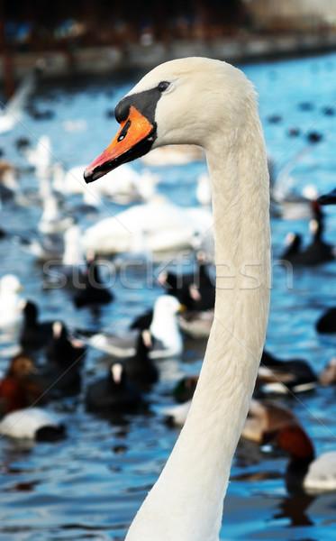 Blanco familia amor naturaleza azul pluma Foto stock © vapi