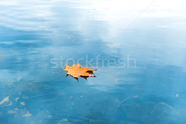 высушите красный Maple Leaf синий воды озеро Сток-фото © vapi