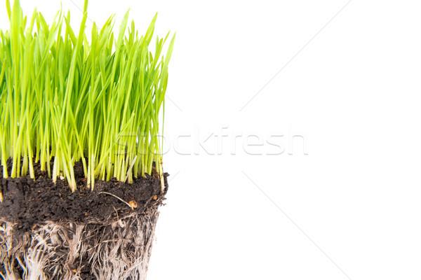 Green grass and soil from a pot Stock photo © vapi
