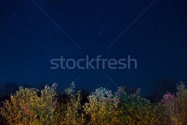 Jesienią lasu niebieski ciemne nieba wiele Zdjęcia stock © vapi