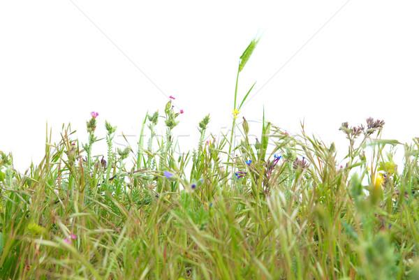 Stock fotó: Zöld · fű · izolált · fehér · textúra · tavasz · fű