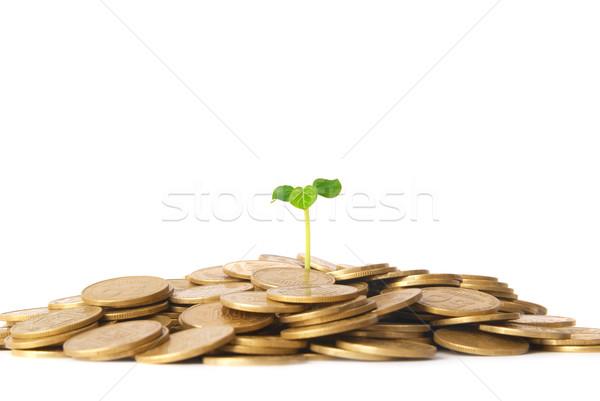 Photo stock: Vert · usine · croissant · pièces · argent · financière