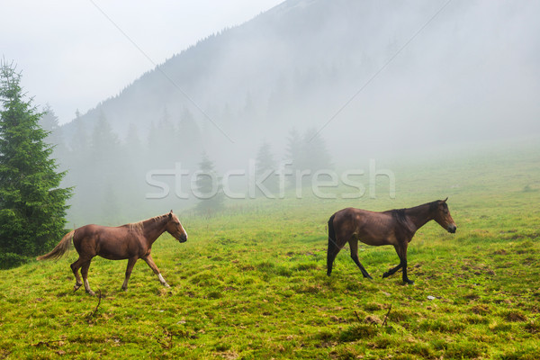 Stock photo: Two wild running horses