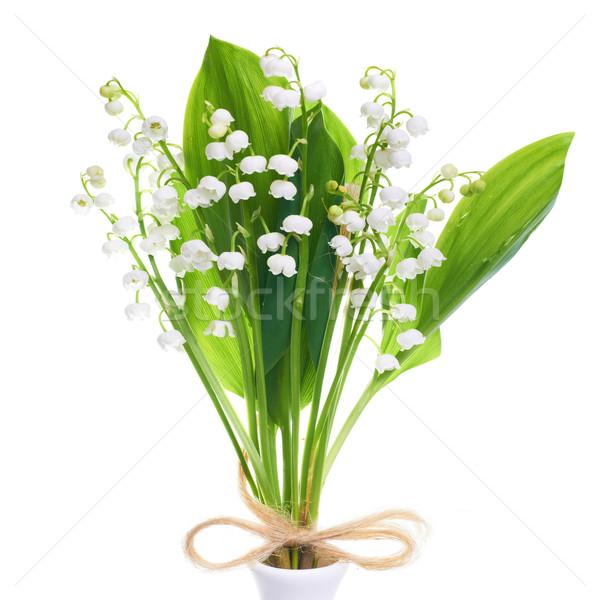 долины белые цветы изолированный белый цветок Сток-фото © vapi