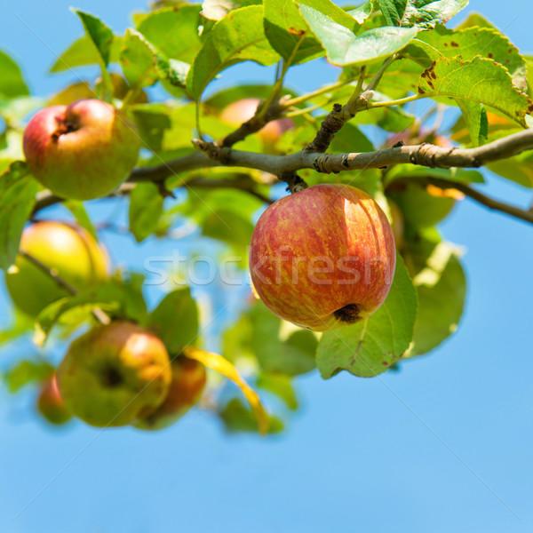 Apples - LocalHarvest