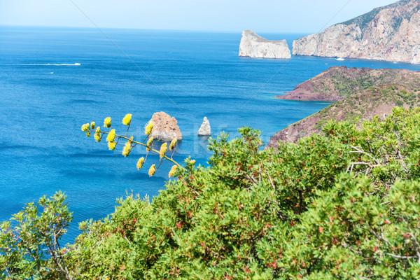 Agave flor belo ver tropical mar Foto stock © vapi