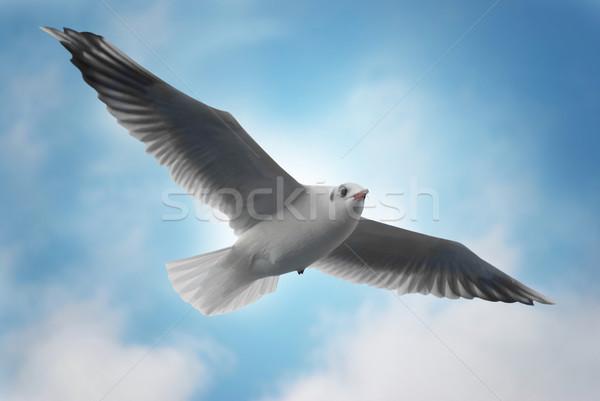 Flying seagull Stock photo © vapi
