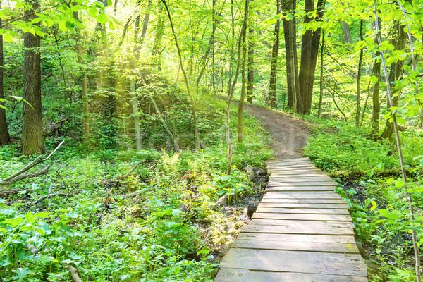 Híd napos zöld erdő fák égbolt Stock fotó © vapi