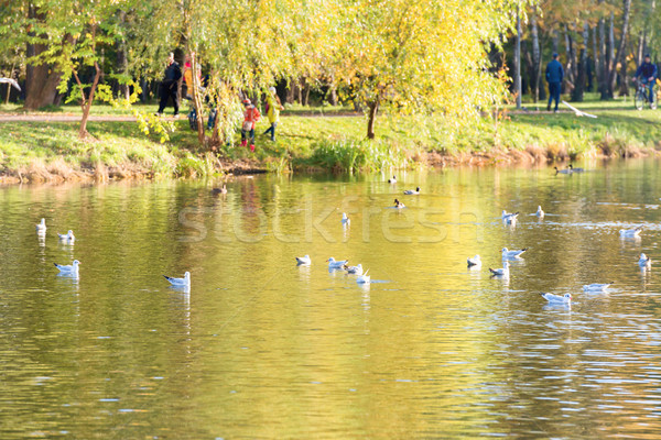 Birds on a lake Stock photo © vapi