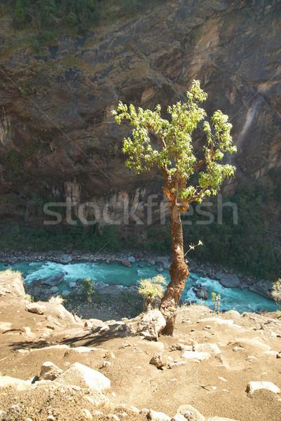 Foto stock: árvore · acima · rio · tibete · ensolarado