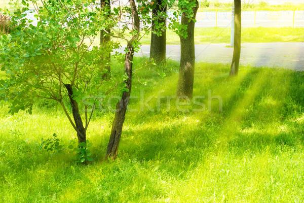 A piece of green urban park Stock photo © vapi