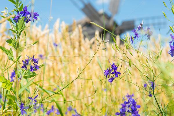 мельница Blue Sky цветок продовольствие древесины Сток-фото © vapi