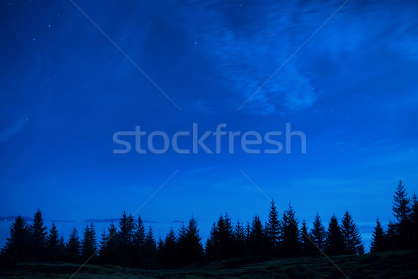 Forest of pine trees under blue dark night sky Stock photo © vapi