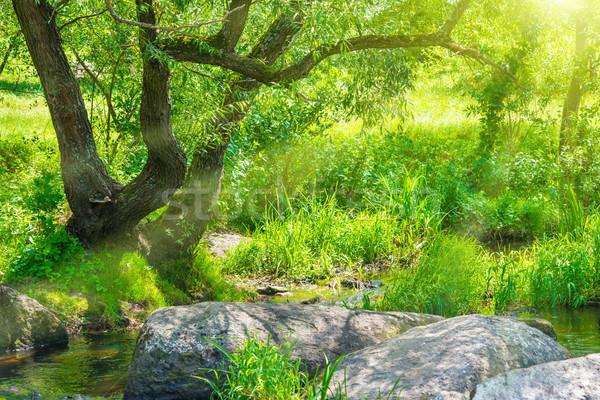 Dere tropikal orman çevre güneşli manzara Stok fotoğraf © vapi