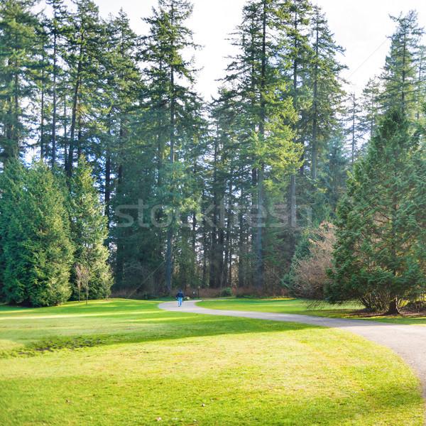 Path in the green sunny park Stock photo © vapi