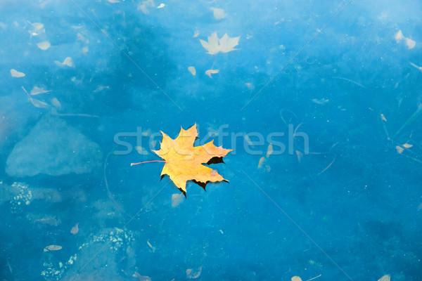 Száraz piros juharlevél kék víz tó Stock fotó © vapi