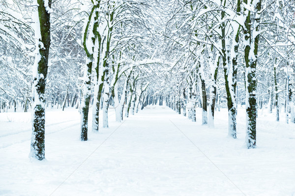 Snow park with white trees Stock photo © vapi