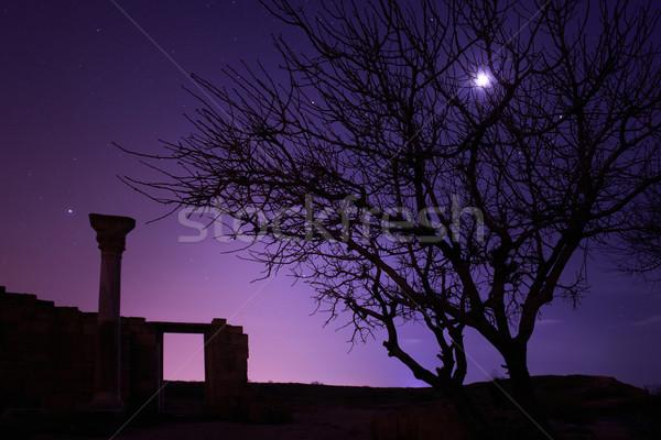 Lonely tree under blue night sky Stock photo © vapi