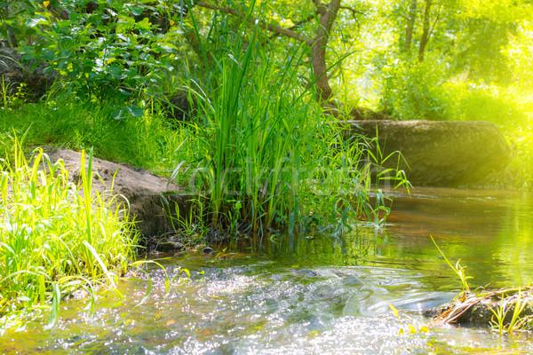 Folyam trópusi erdő környezet napos tájkép Stock fotó © vapi