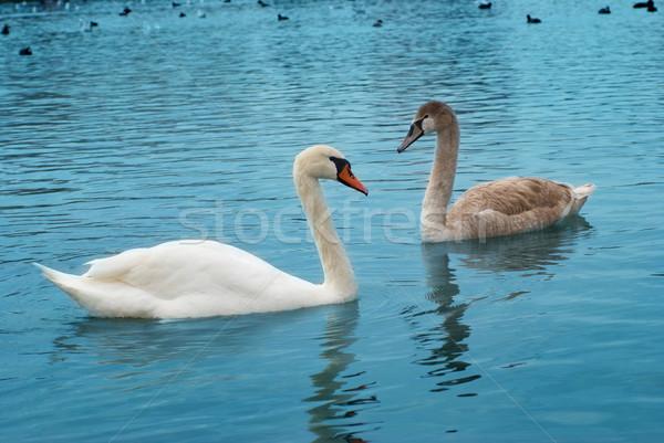 Kettő tó kék víz család szív Stock fotó © vapi