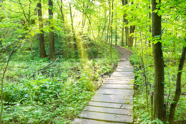 Bridge in the sunny green forest Stock photo © vapi