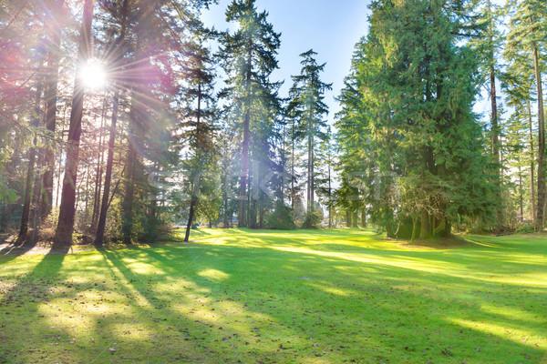 Zöld napos park nagy fák gyep Stock fotó © vapi