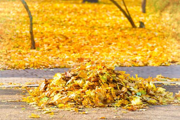куча осень желтый листьев очистки парка Сток-фото © vapi