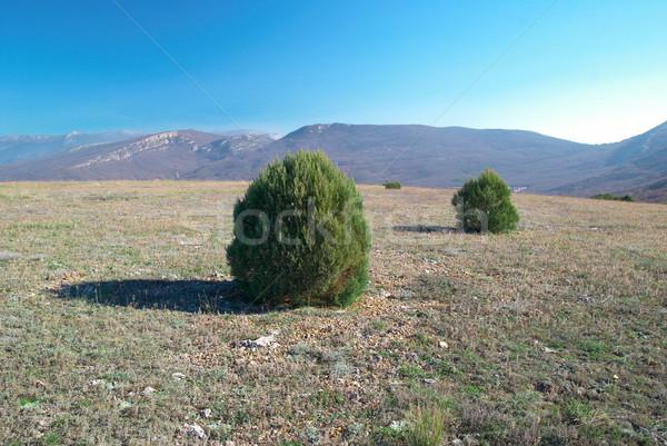 Verde campo montanhas céu árvore Foto stock © vapi