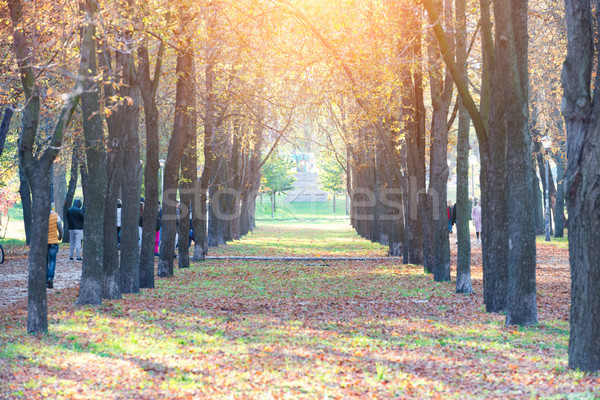 Central alley in autumn park Stock photo © vapi