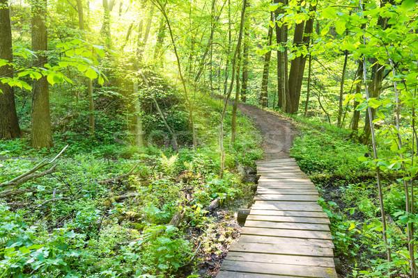 Stock fotó: Híd · napos · zöld · erdő · fák · tavasz