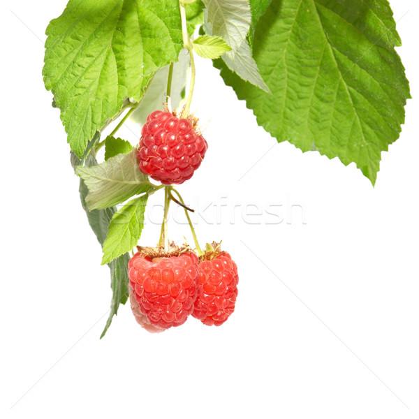 Raspberries with green leaves Stock photo © vapi