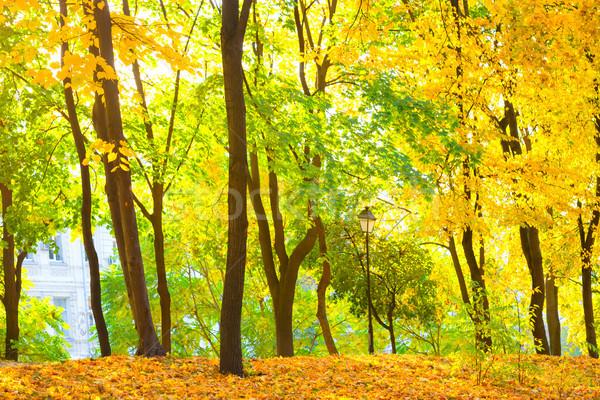 秋 森林 公園 明るい 黄色 木 ストックフォト © vapi