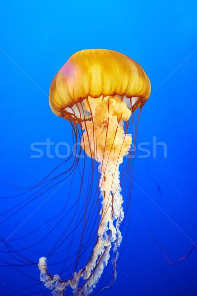 Oranje kwal zee Blauw oceaan water Stockfoto © vapi
