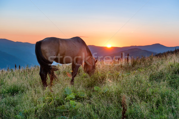 Stock photo: Brown horse grazing on a field