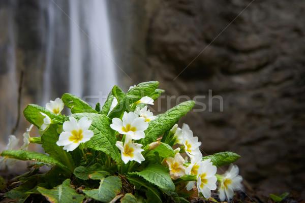 Frühling gelbe Blume Blume Wald Hintergrund Wasserfall Stock foto © vapi