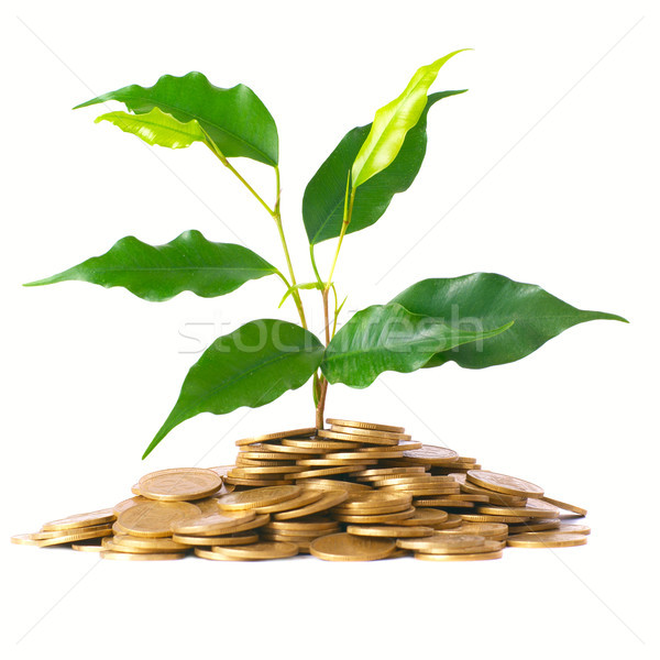 Green tree growing from the coins Stock photo © vapi