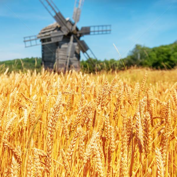Değirmen mavi gökyüzü gökyüzü gıda çim Stok fotoğraf © vapi
